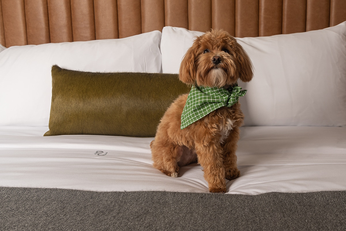 pet friendly hotel rooms in menlo park near silicon valley